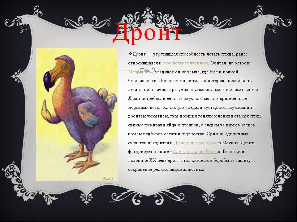 Дронт Дронт— утратившая способность летать птица, ранее относившаяся к семей...