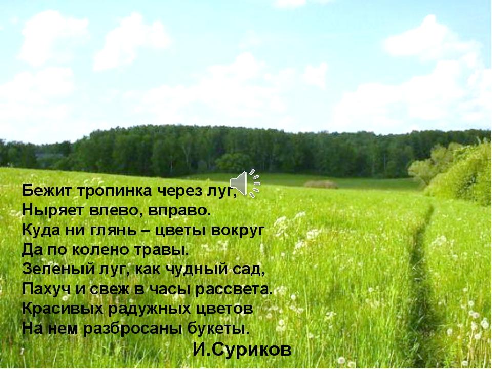 Бежит тропинка через луг, Ныряет влево, вправо. Куда ни глянь – цветы вокруг...