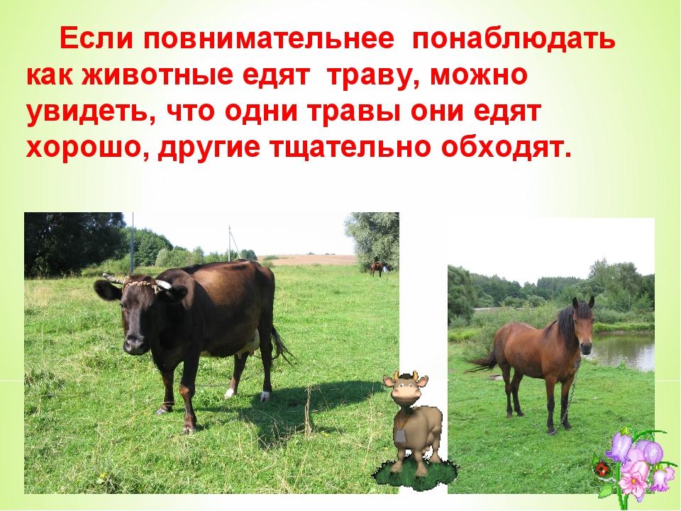 Если повнимательнее понаблюдать как животные едят траву, можно увидеть, что...