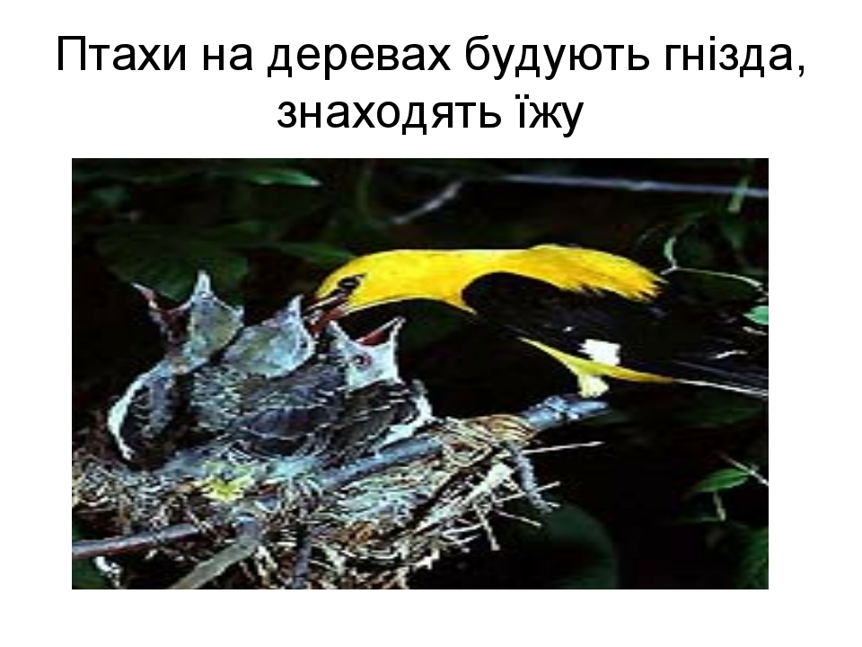 Птахи на деревах будують гнізда, знаходять їжу
