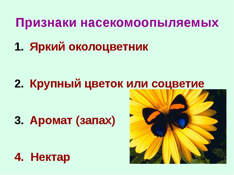 Признаки насекомоопыляемых Яркий околоцветник Крупный цветок или соцветие Аро...