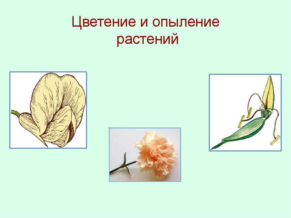 Цветение и опыление растений