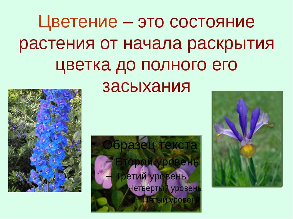 Цветение – это состояние растения от начала раскрытия цветка до полного его з...