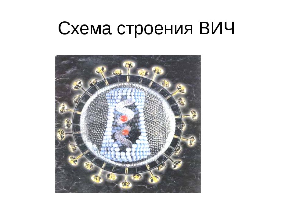 Схема строения ВИЧ