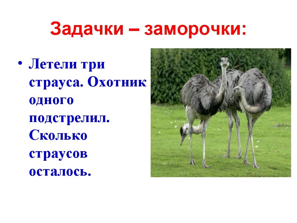 Задачки – заморочки: Летели три страуса. Охотник одного подстрелил. Сколько с...