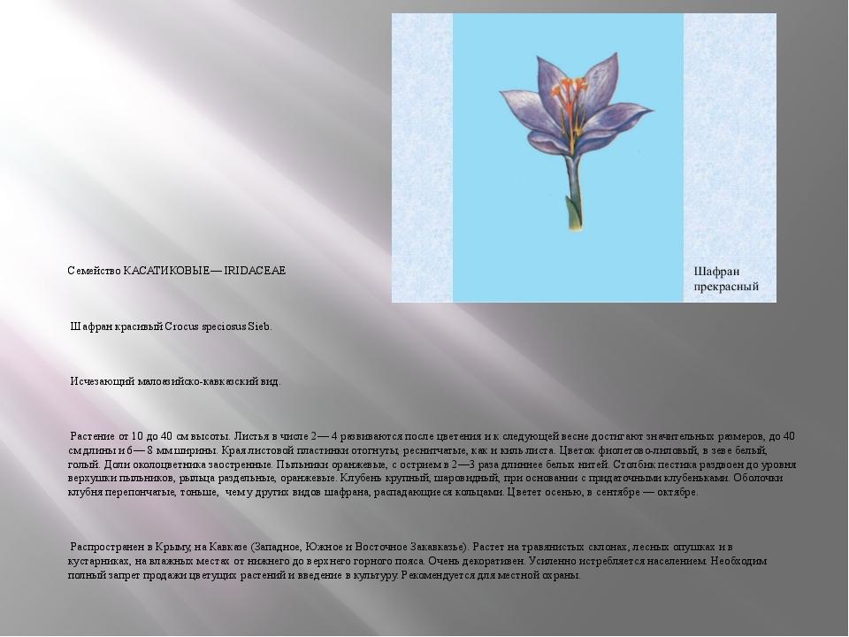 Семейство КАСАТИКОВЫЕ— IRIDACEAE Шафран красивый Crocus speciosus Sieb. Исчез...