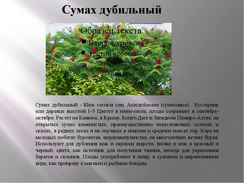 Сумах дубильный Сумах дубильный - Rhus coriaria сем. Anacardiaceae (сумаховые...