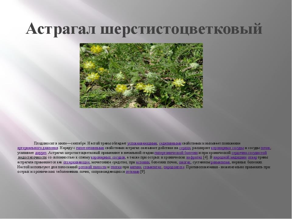 Астрагал шерстистоцветковый Плодоносит в июле—сентябре. Настой травы обладает...