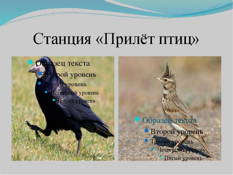 Станция «Прилёт птиц»