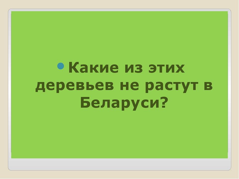 Какие из этих деревьев не растут в Беларуси?