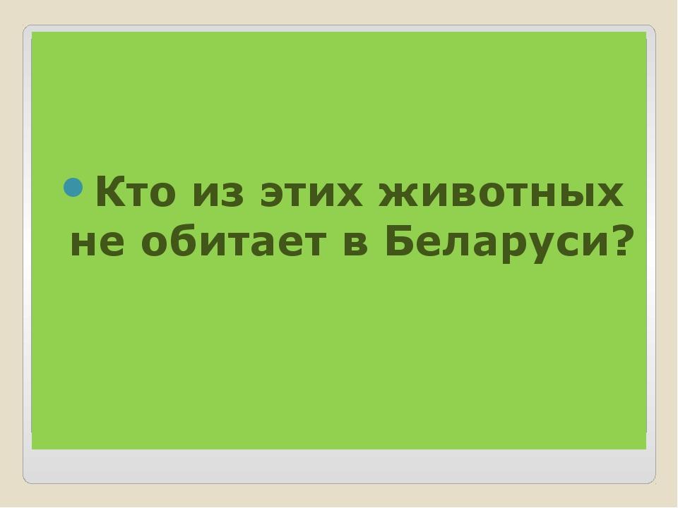Кто из этих животных не обитает в Беларуси?