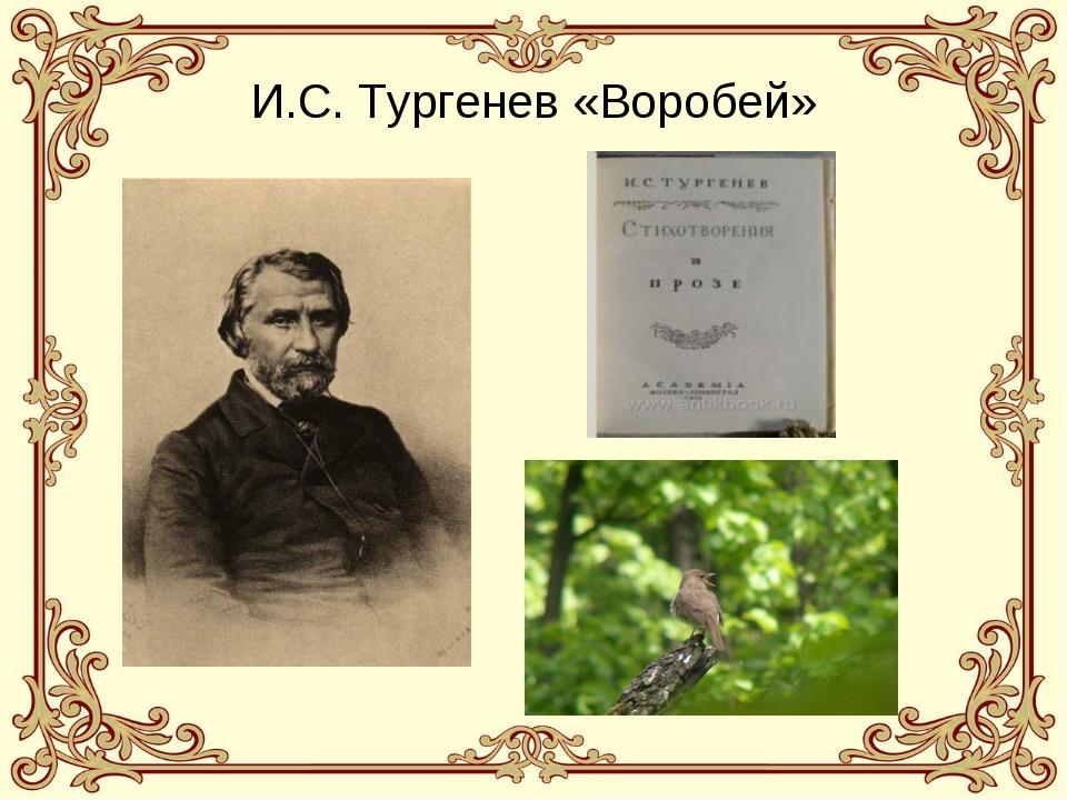И.С. Тургенев «Воробей»