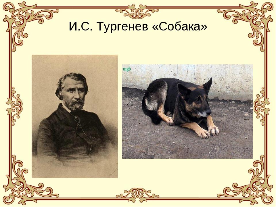 И.С. Тургенев «Собака»