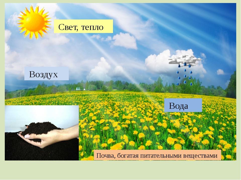 Свет, тепло Вода Воздух Почва, богатая питательными веществами