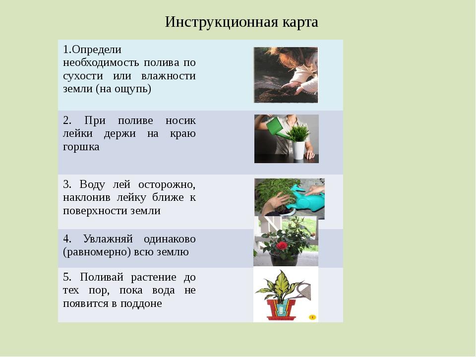 Инструкционная карта 1.Определи необходимость полива по сухости или влажности...