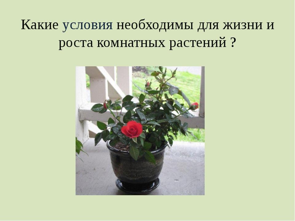 Какие условия необходимы для жизни и роста комнатных растений ?