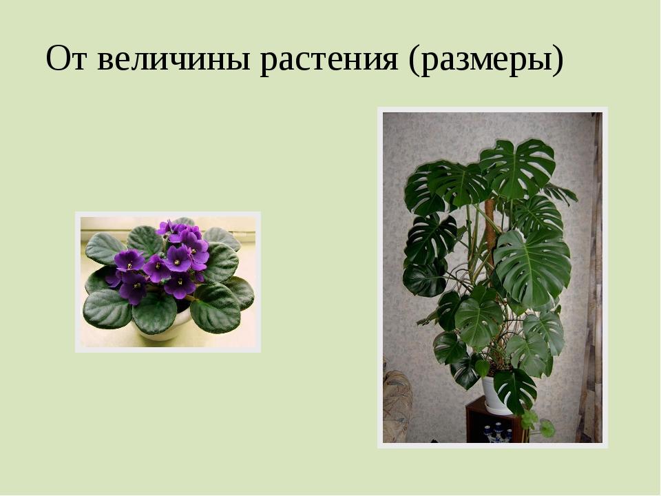 От величины растения (размеры)