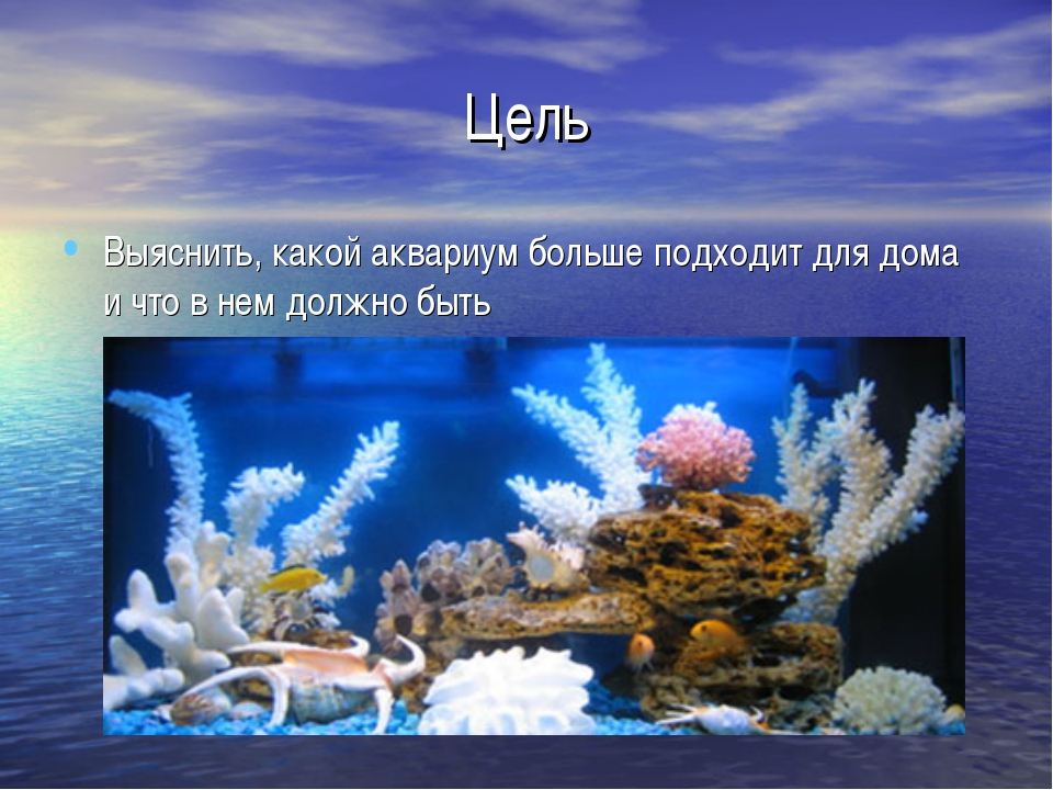 Цель Выяснить, какой аквариум больше подходит для дома и что в нем должно быть