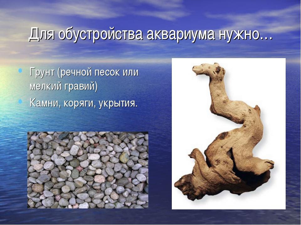 Для обустройства аквариума нужно… Грунт (речной песок или мелкий гравий) Камн...