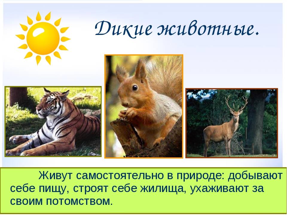 Дикие животные. Живут самостоятельно в природе: добывают себе пищу, стро...