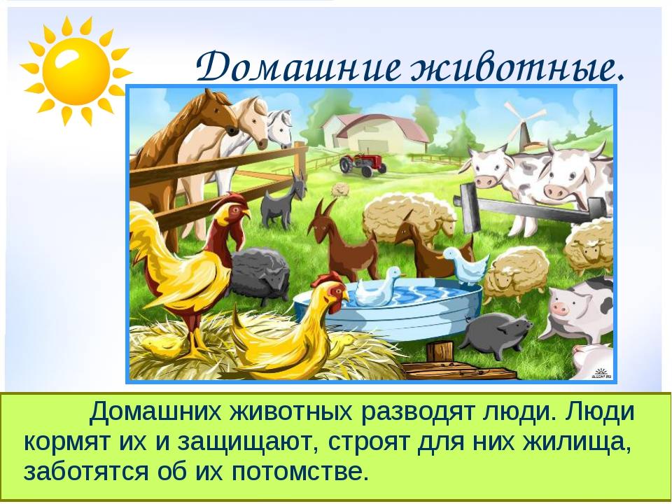 Домашние животные. Домашних животных разводят люди. Люди кормят их и защ...