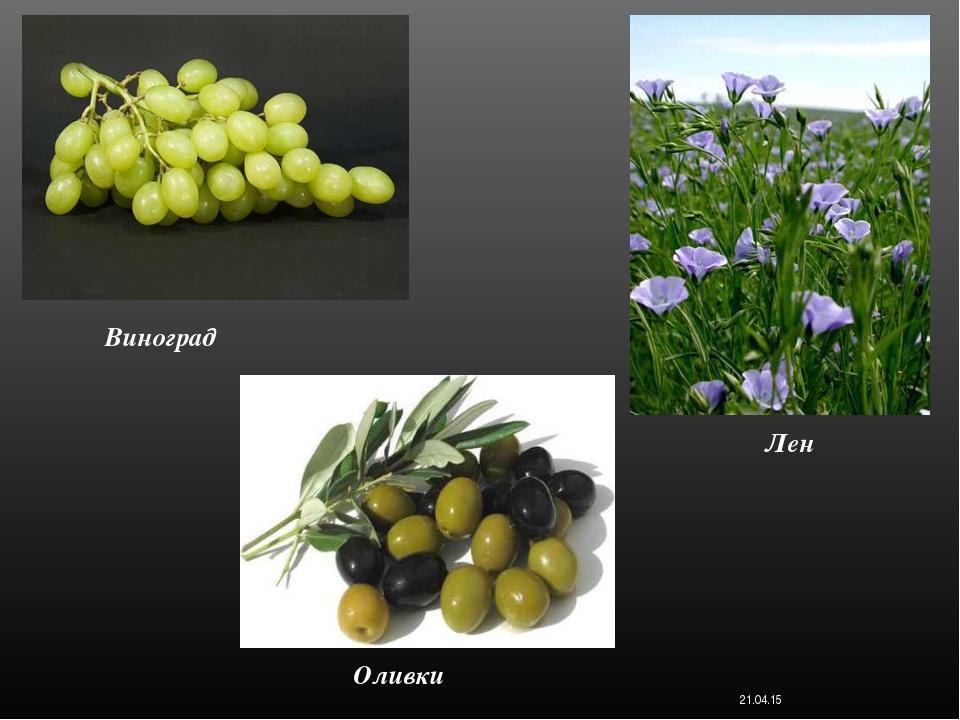 Виноград * Лен Оливки Костюк Алёна 11-Б класс