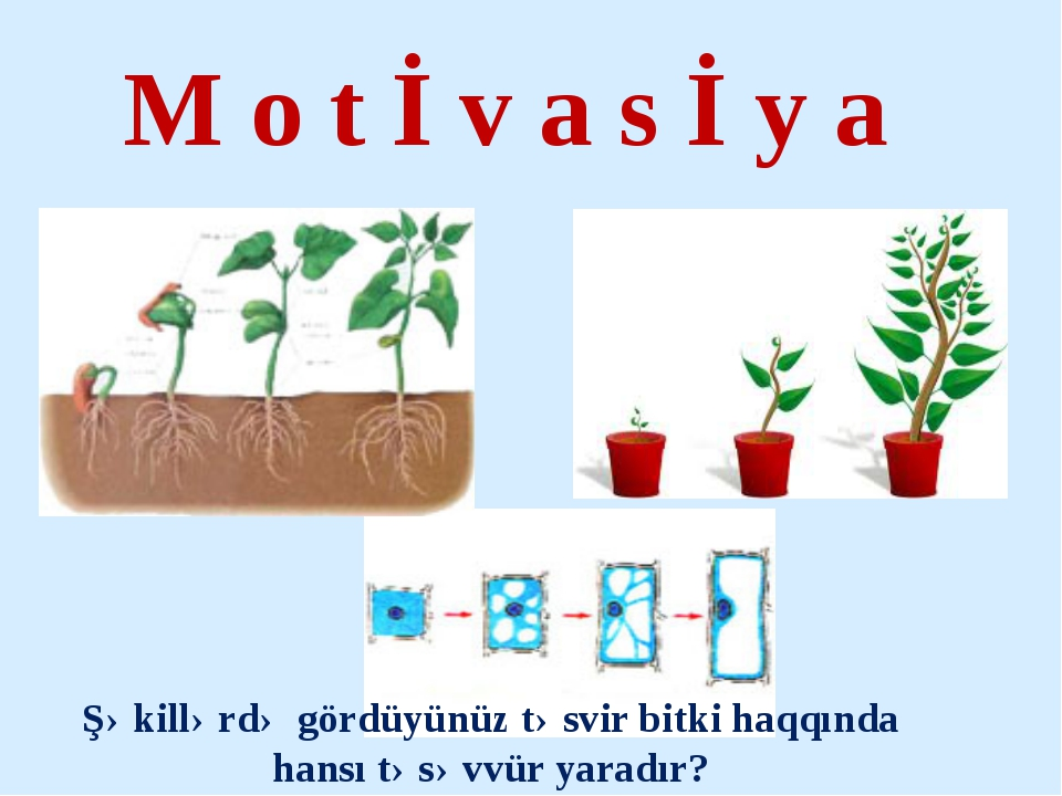 M o t İ v a s İ y a Şəkillərdə gördüyünüz təsvir bitki haqqında hansı təsəvvü...