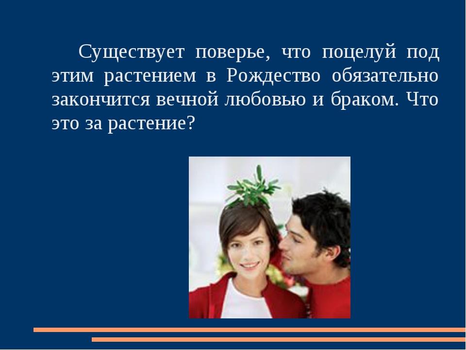 Существует поверье, что поцелуй под этим растением в Рождество обязательно з...