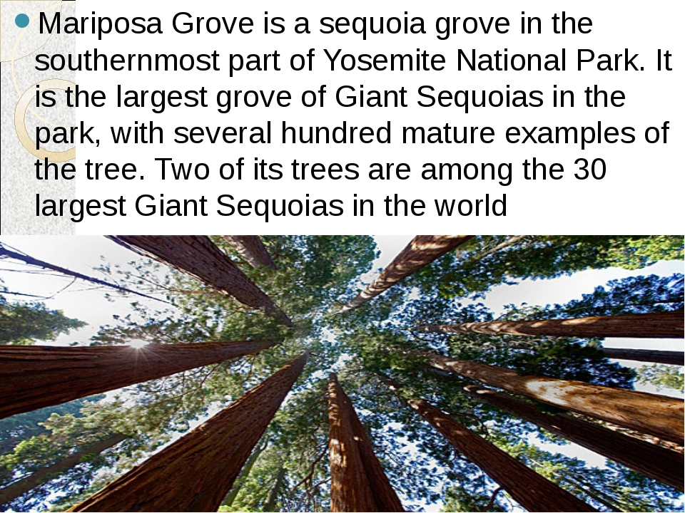 Mariposa Grove is a sequoia grove in the southernmost part of Yosemite Nation...