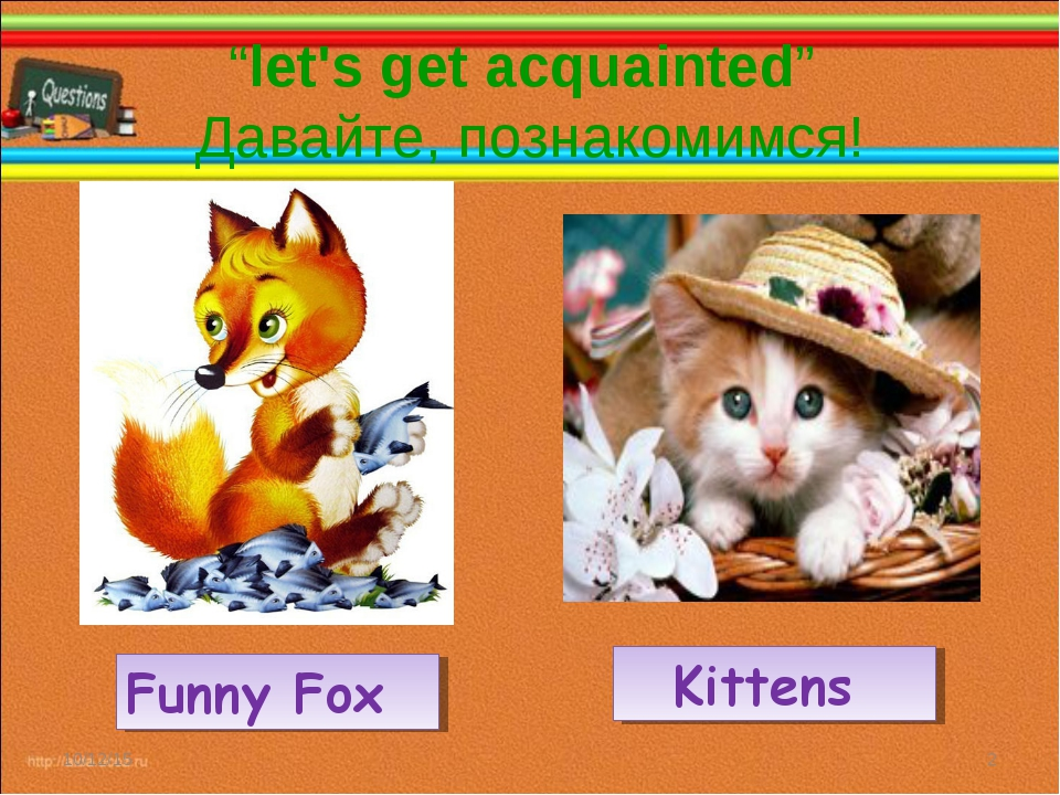 """let's get acquainted"" Давайте, познакомимся! * * Funny Fox Kittens"