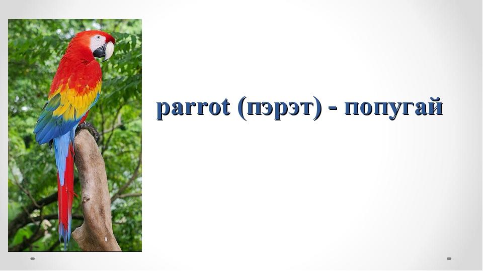 parrot (пэрэт) - попугай