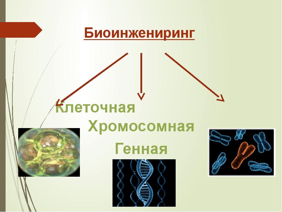 Биоинжениринг Клеточная Хромосомная Генная
