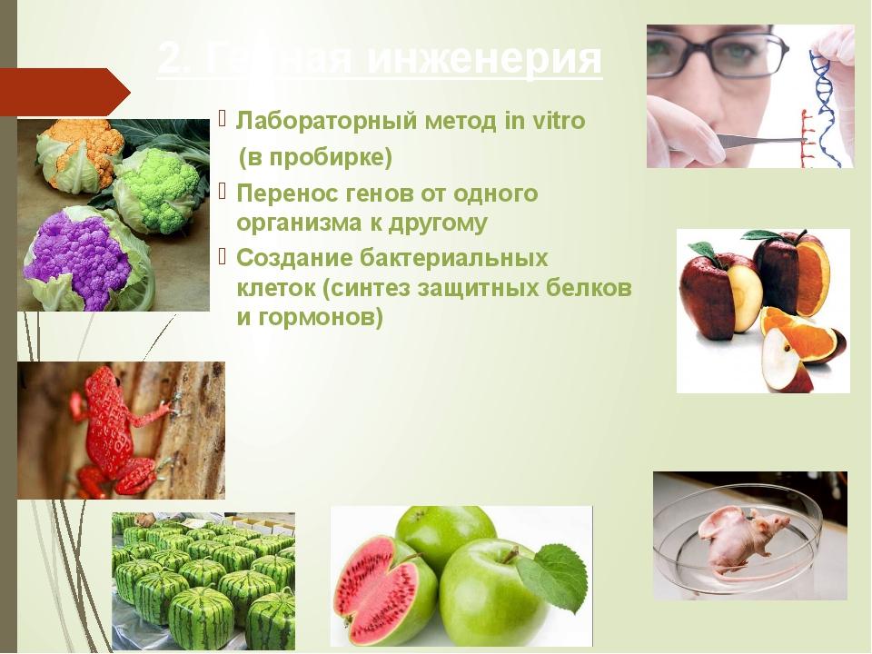 2. Генная инженерия Лабораторный метод in vitro (в пробирке) Перенос генов от...