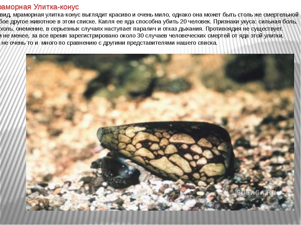 Мраморная Улитка-конус На вид, мраморная улитка-конус выглядит красиво и очен...