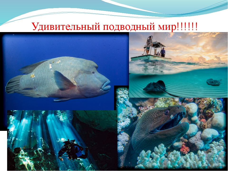 Удивительный подводный мир!!!!!!