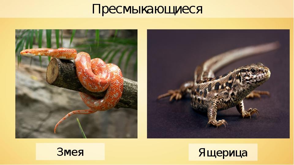 Пресмыкающиеся Ящерица Змея