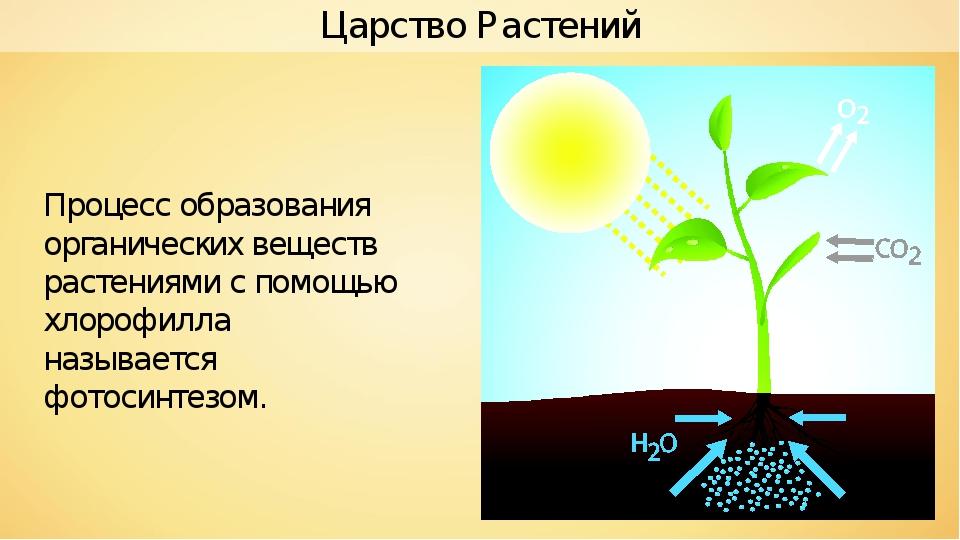 Процесс образования органических веществ растениями с помощью хлорофилла назы...
