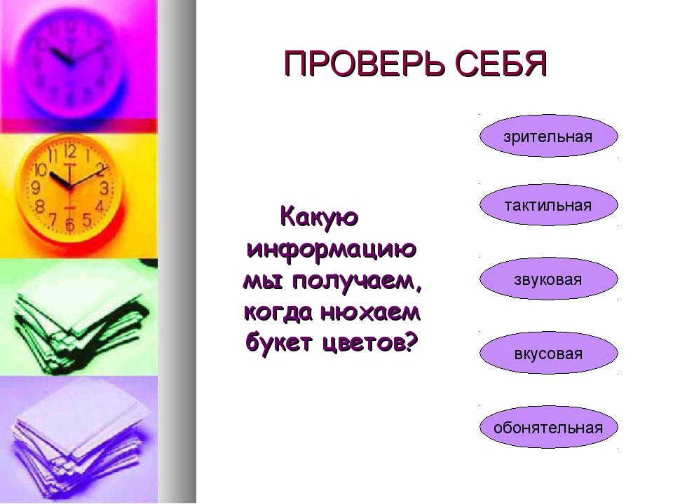 ПРОВЕРЬ СЕБЯ Какую информацию мы получаем, когда нюхаем букет цветов? зритель...