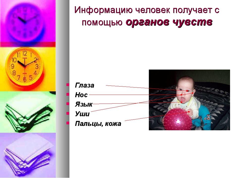 Информацию человек получает с помощью органов чувств Глаза Нос Язык Уши Пальц...