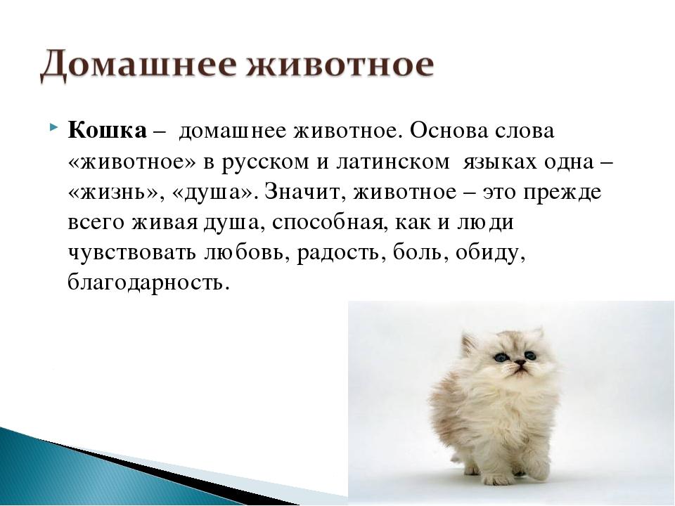 Кошка – домашнее животное. Основа слова «животное» в русском и латинском язык...