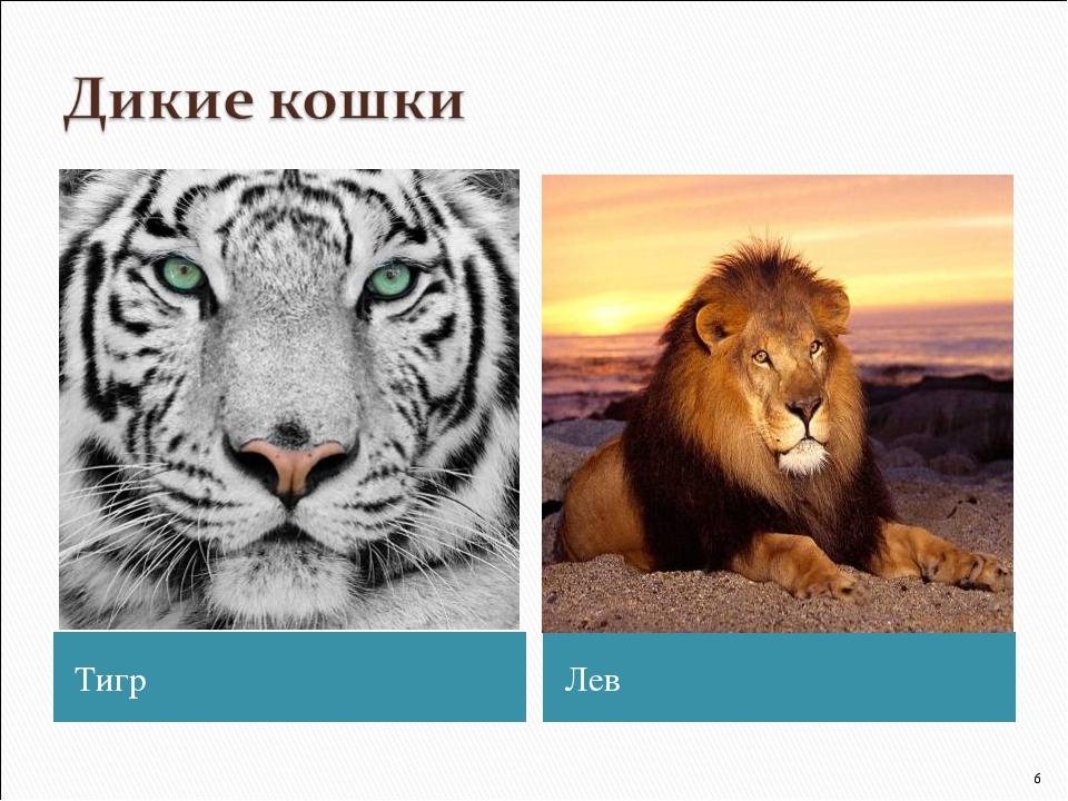 Тигр Лев