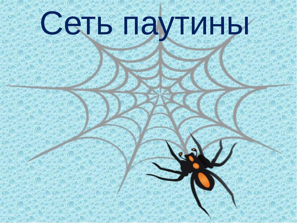 Сеть паутины