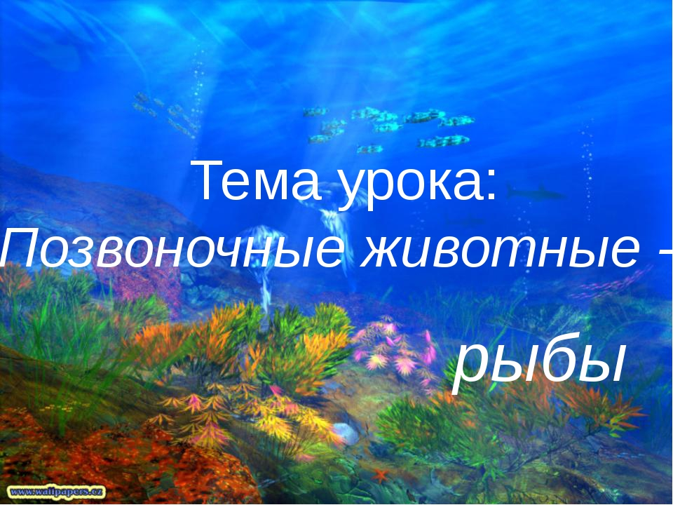 Тема урока: Позвоночные животные - рыбы
