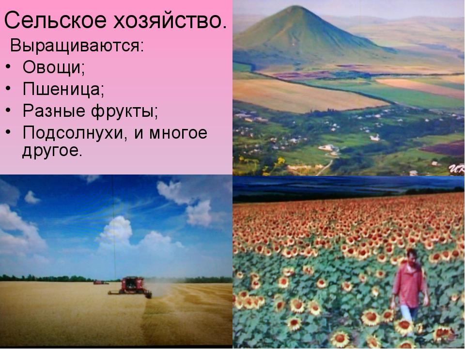 Сельское хозяйство. Выращиваются: Овощи; Пшеница; Разные фрукты; Подсолнухи,...