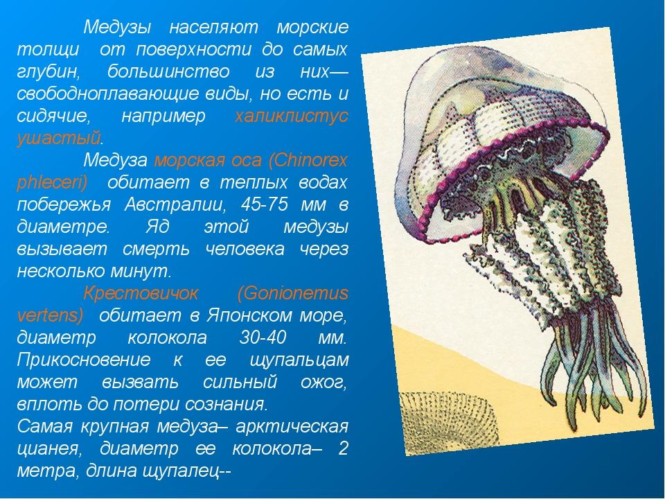Медузы населяют морские толщи от поверхности до самых глубин, большинство из...