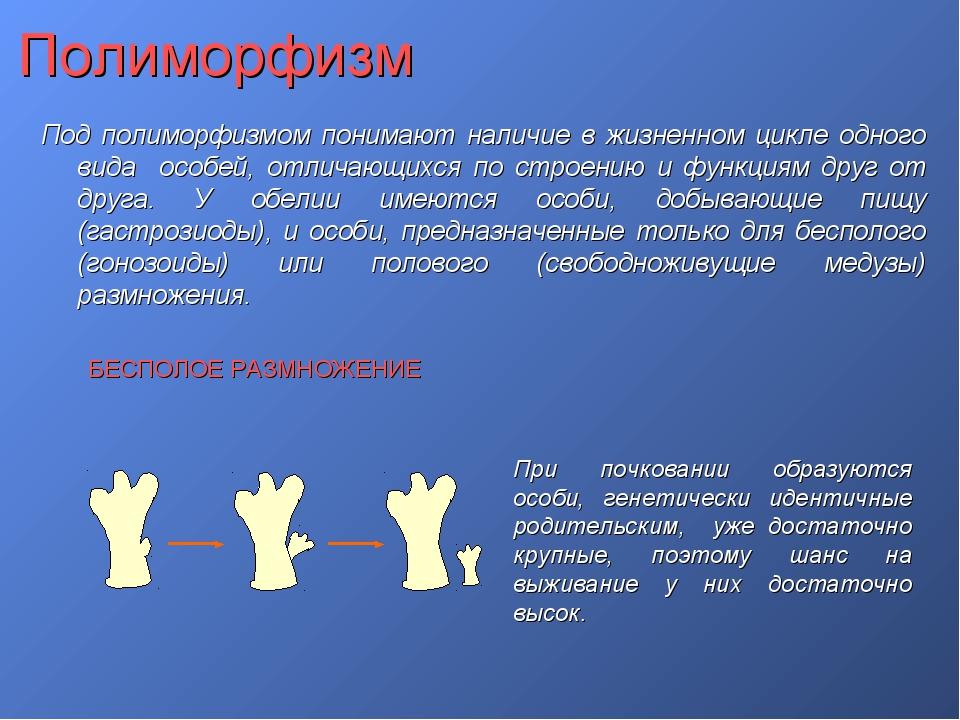 Полиморфизм Под полиморфизмом понимают наличие в жизненном цикле одного вида...