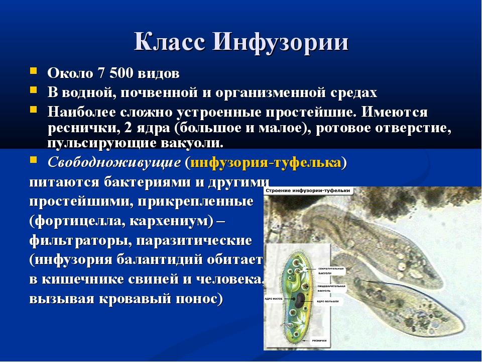 Класс Инфузории Около 7 500 видов В водной, почвенной и организменной средах...