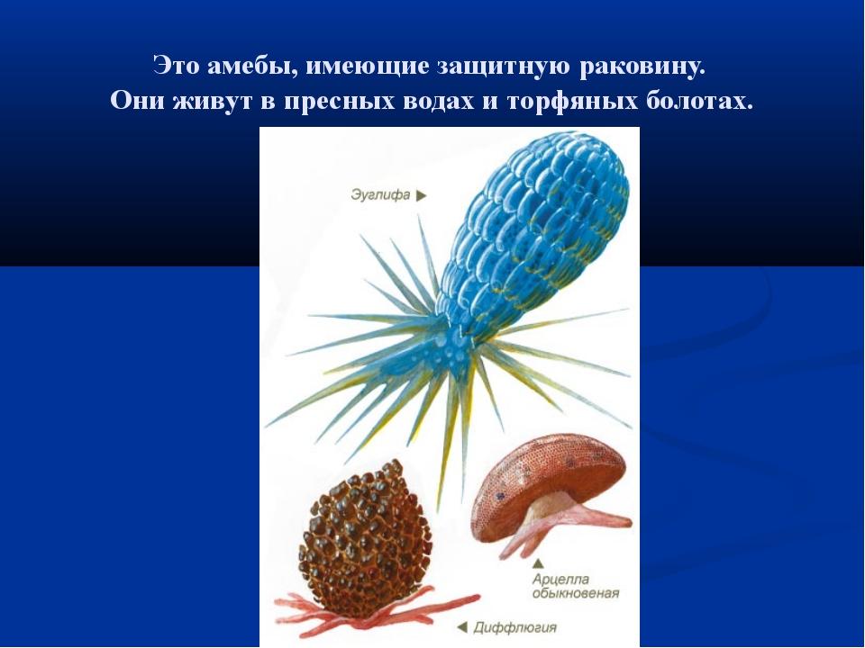 Это амебы, имеющие защитную раковину. Они живут в пресных водах и торфяных бо...