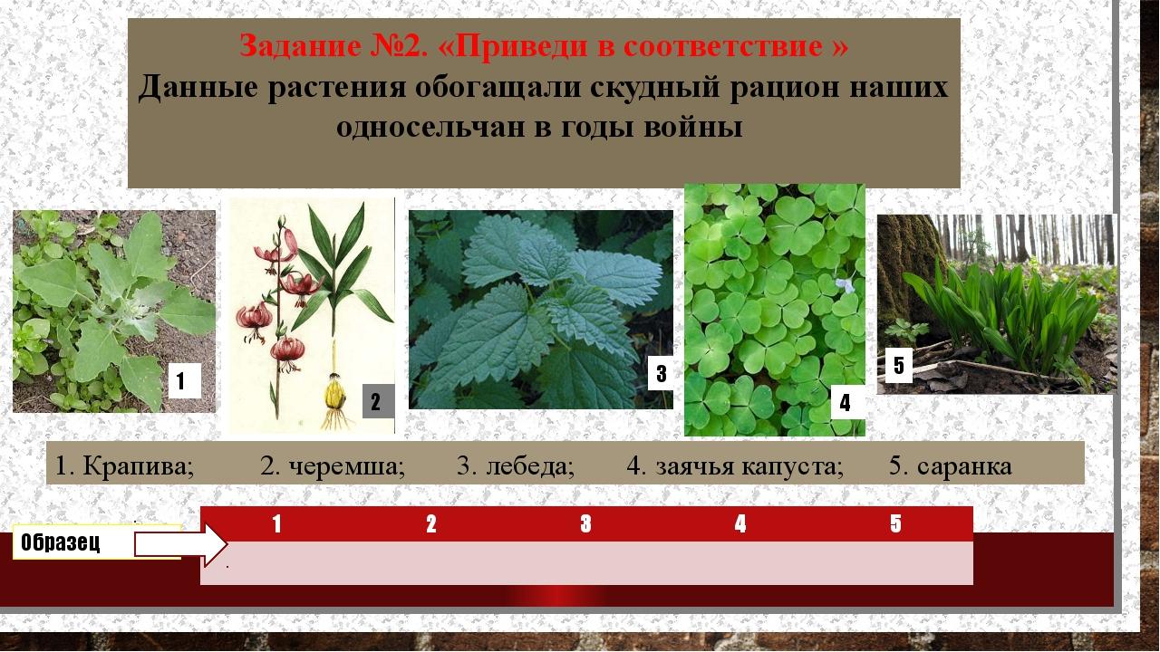 Задание №2. «Приведи в соответствие » Данные растения обогащали скудный рацио...