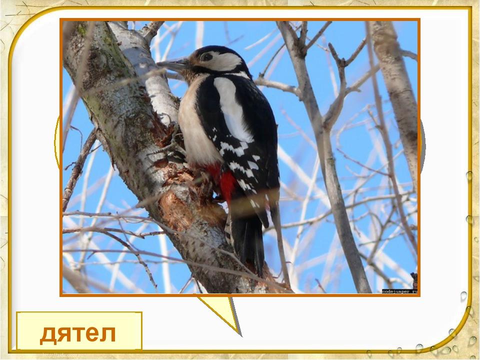 В своей лесной палате Носит пёстренький халатик, Он деревья лечит, Постучит –...